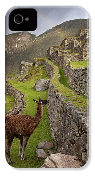 Llama Stands On Agricultural Terraces IPhone 4s Case by Jaynes Gallery