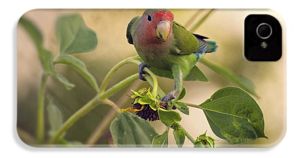 Lovebird On  Sunflower Branch  IPhone 4s Case by Saija  Lehtonen