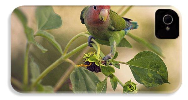 Lovebird On  Sunflower Branch  IPhone 4s Case