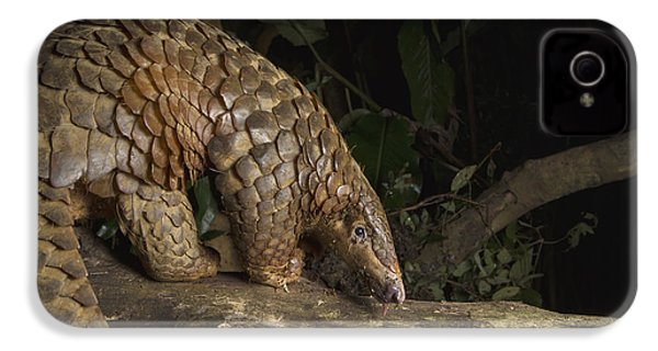 Malayan Pangolin Eating Ants Vietnam IPhone 4s Case by Suzi Eszterhas