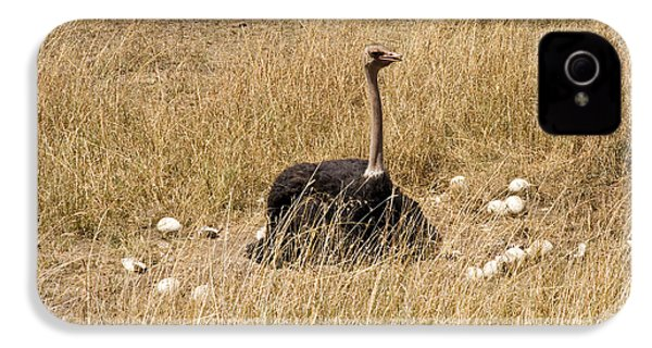 Male Ostrich Sitting On Communal Eggs IPhone 4s Case by Gregory G. Dimijian, M.D.