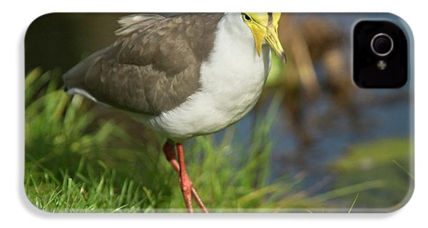 Masked Lapwing IPhone 4s Case by Bob Gibbons