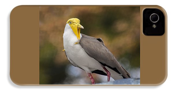 Masked Lapwing IPhone 4s Case by Carolyn Marshall