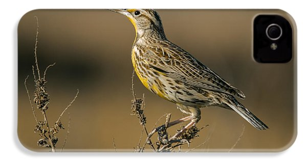 Meadowlark On Weed IPhone 4s Case by Robert Frederick