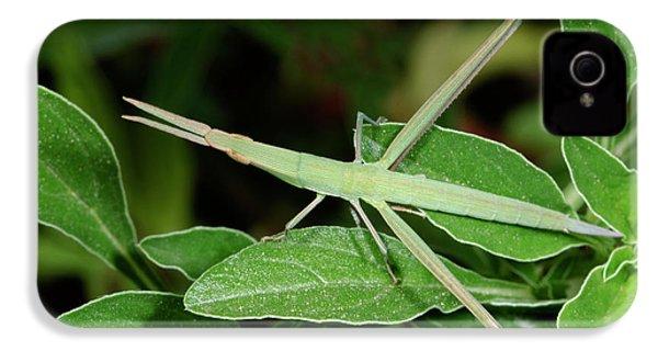 Mediterranean Slant-faced Grasshopper IPhone 4s Case by Nigel Downer