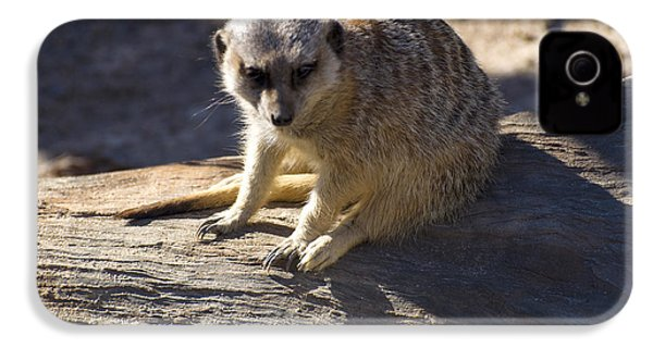 Meerkat Resting On A Rock IPhone 4s Case by Chris Flees