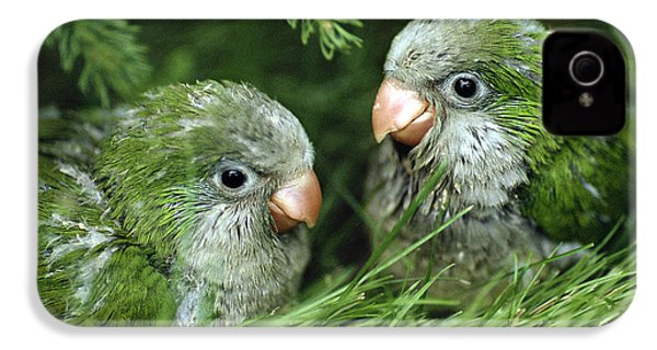 Monk Parakeet Chicks IPhone 4s Case by Paul J. Fusco