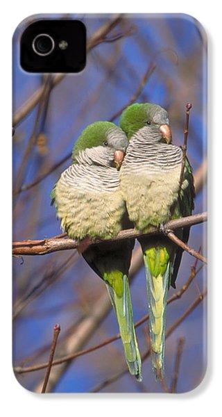 Monk Parakeets IPhone 4s Case by Paul J. Fusco