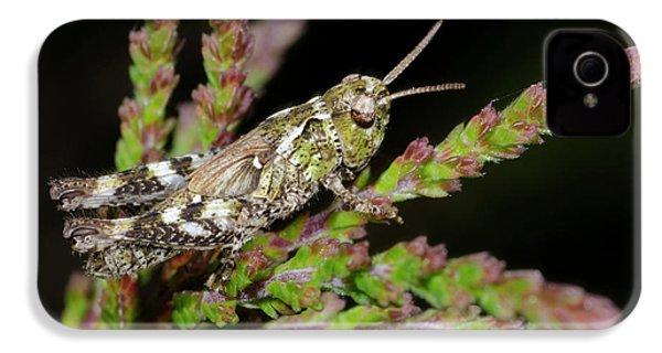 Mottled Grasshopper Juvenile IPhone 4s Case by Nigel Downer