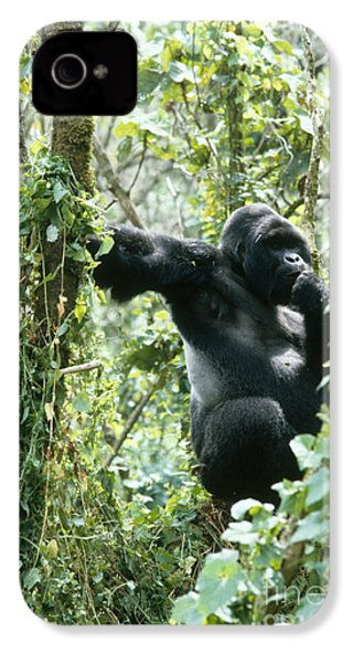 Mountain Gorilla IPhone 4s Case by Tierbild Okapia