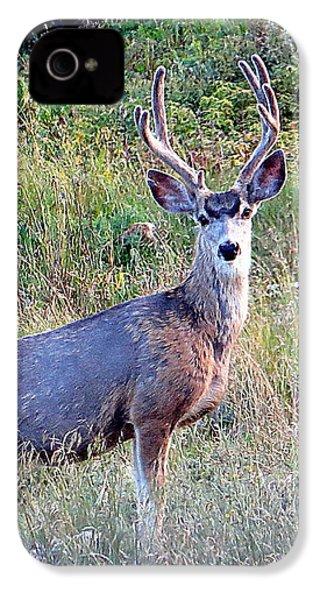 Mule Deer Buck IPhone 4s Case by Karen Shackles