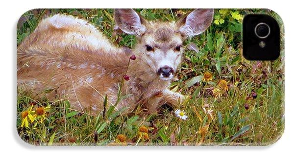 Mule Deer Fawn IPhone 4s Case by Karen Shackles