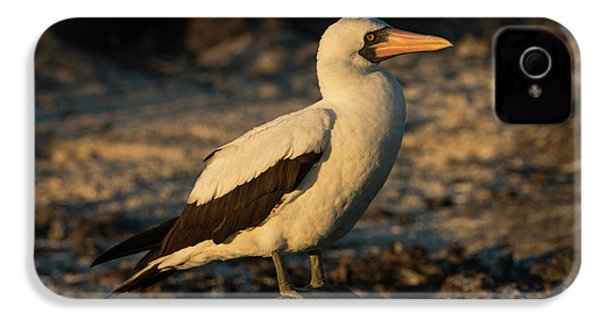 Nazca Booby (sula Granti IPhone 4s Case by Pete Oxford