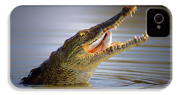 Nile Crocodile Swollowing Fish IPhone 4s Case by Johan Swanepoel