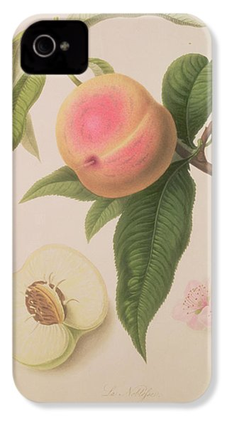 Noblesse Peach IPhone 4s Case by William Hooker