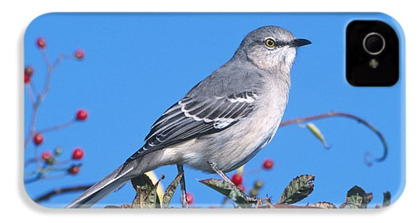 Northern Mockingbird IPhone 4s Case by Paul J. Fusco