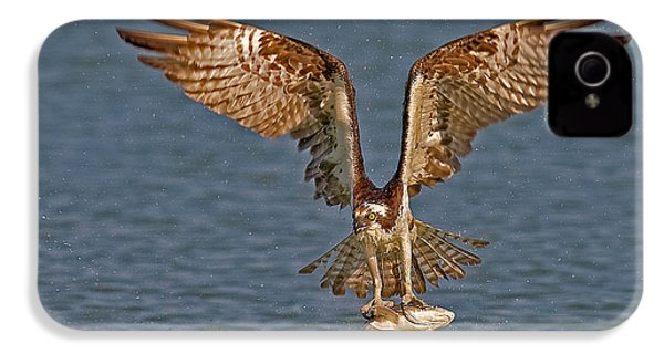 Osprey Morning Catch IPhone 4s Case by Susan Candelario