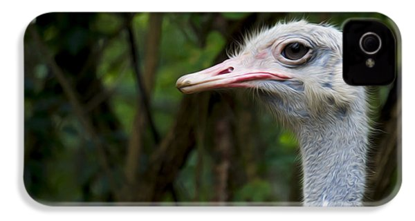 Ostrich Head IPhone 4s Case by Aged Pixel