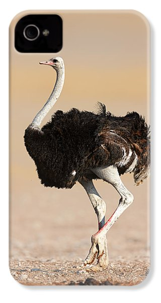 Ostrich IPhone 4s Case by Johan Swanepoel