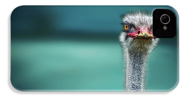 Ostrich Protecting Two Poor Chicken From The Wind IPhone 4s Case
