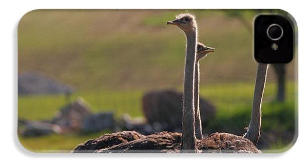 Ostriches IPhone 4s Case by Dan Sproul