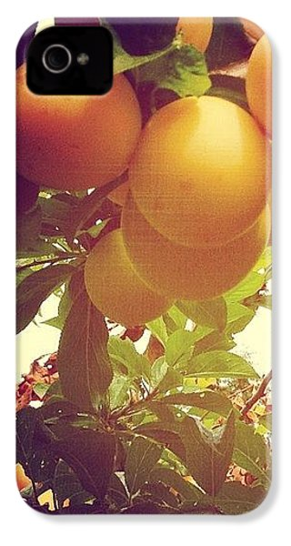 Our Plum Tree Is Loaded This Year...any IPhone 4s Case