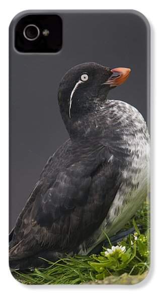 Parakeet Auklet Sitting In Green IPhone 4s Case