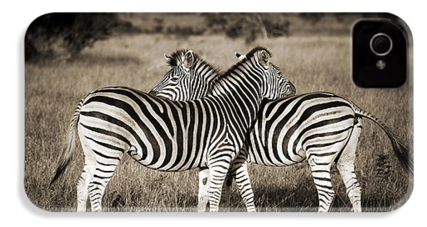 Perfect Zebras IPhone 4s Case by Delphimages Photo Creations