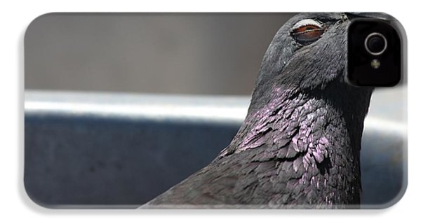 IPhone 4s Case featuring the photograph Pigeon In Ecstasy  by Nathan Rupert