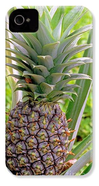 Pineapple Plant IPhone 4s Case by Millard H. Sharp