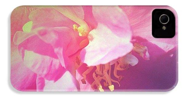 Pink Camellia Vintique Edit IPhone 4s Case