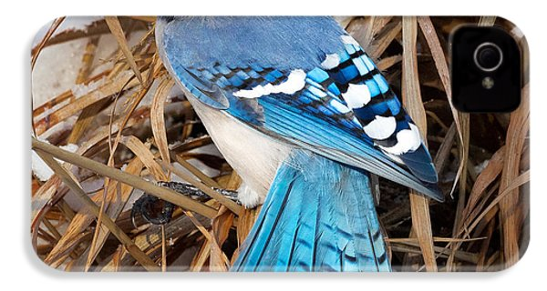 Portrait Of A Blue Jay Square IPhone 4s Case by Bill Wakeley