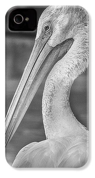 Portrait Of A Pelican IPhone 4s Case by Jon Woodhams
