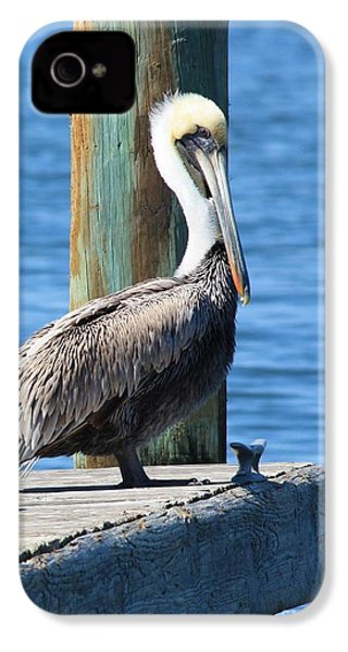 Posing Pelican IPhone 4s Case by Carol Groenen