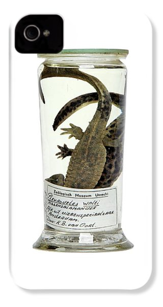 Preserved Newts IPhone 4s Case by Gregory Davies