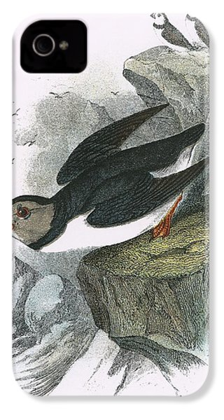 Puffin IPhone 4s Case by English School