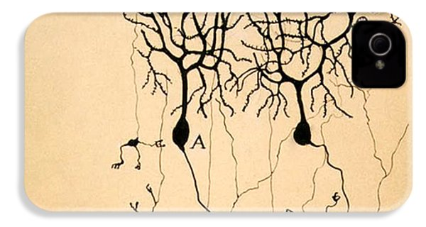 Purkinje Cells By Cajal 1899 IPhone 4s Case