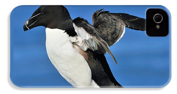 Razorbill IPhone 4s Case by Tony Beck