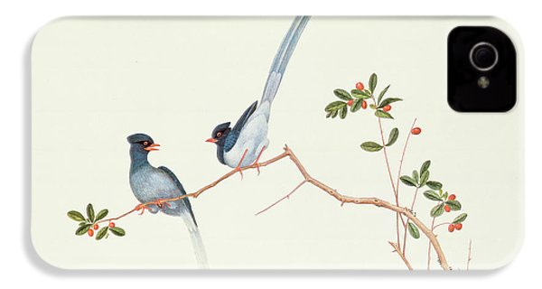 Red Billed Blue Magpies On A Branch With Red Berries IPhone 4s Case by Chinese School