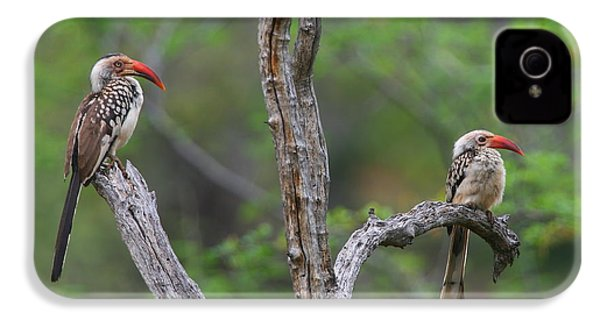 Red-billed Hornbills IPhone 4s Case by Bruce J Robinson