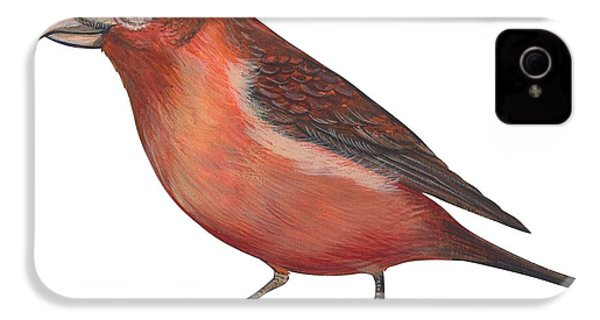 Red Crossbill IPhone 4s Case by Anonymous