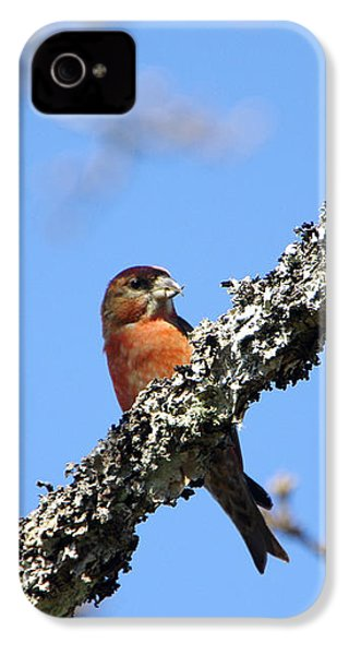 Red Crossbill Finch IPhone 4s Case by Marilyn Wilson