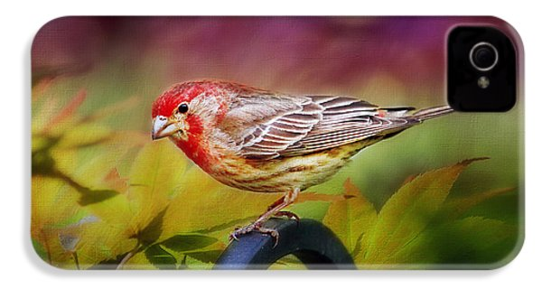 Red Finch IPhone 4s Case by Darren Fisher