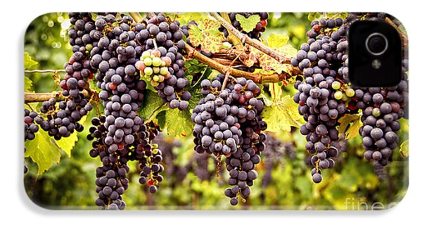 Red Grapes In Vineyard IPhone 4s Case