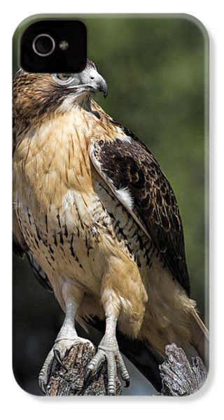 Red Tailed Hawk IPhone 4s Case by Dale Kincaid