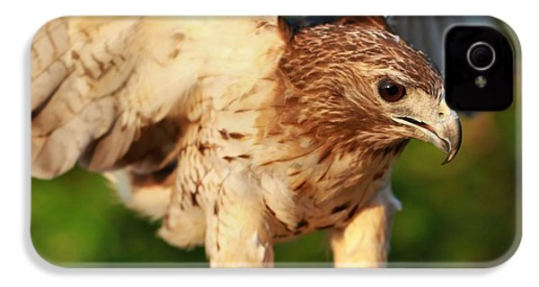 Red Tailed Hawk Hunting IPhone 4s Case by Dan Sproul