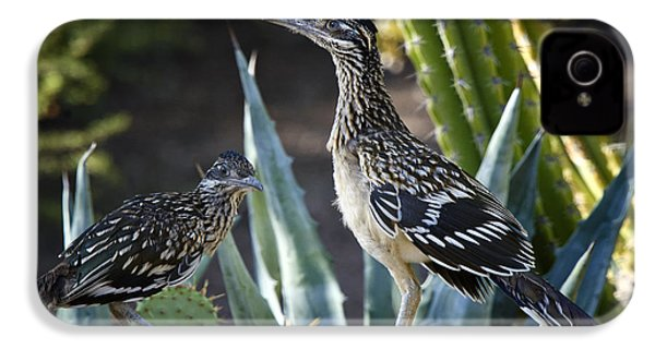 Roadrunners At Play  IPhone 4s Case by Saija  Lehtonen