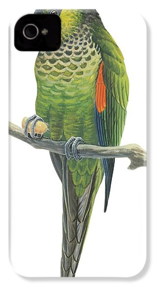Rock Parakeet IPhone 4s Case by Anonymous