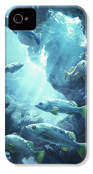 Rockfish Sanctuary IPhone 4s Case by Javier Lazo