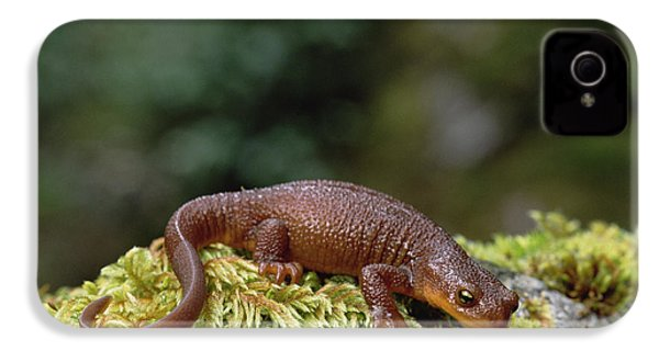 Rough-skinned Newt Oregon IPhone 4s Case by Gerry Ellis